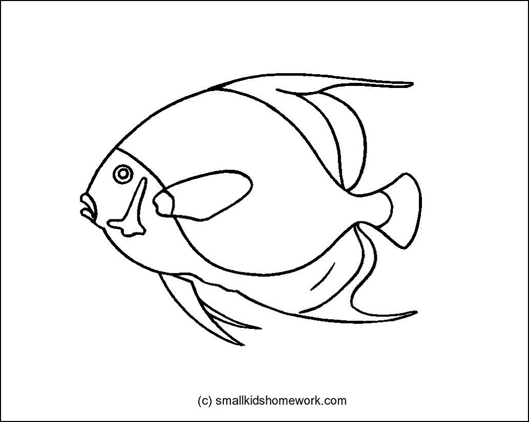 French Angel Fish Outline Picture