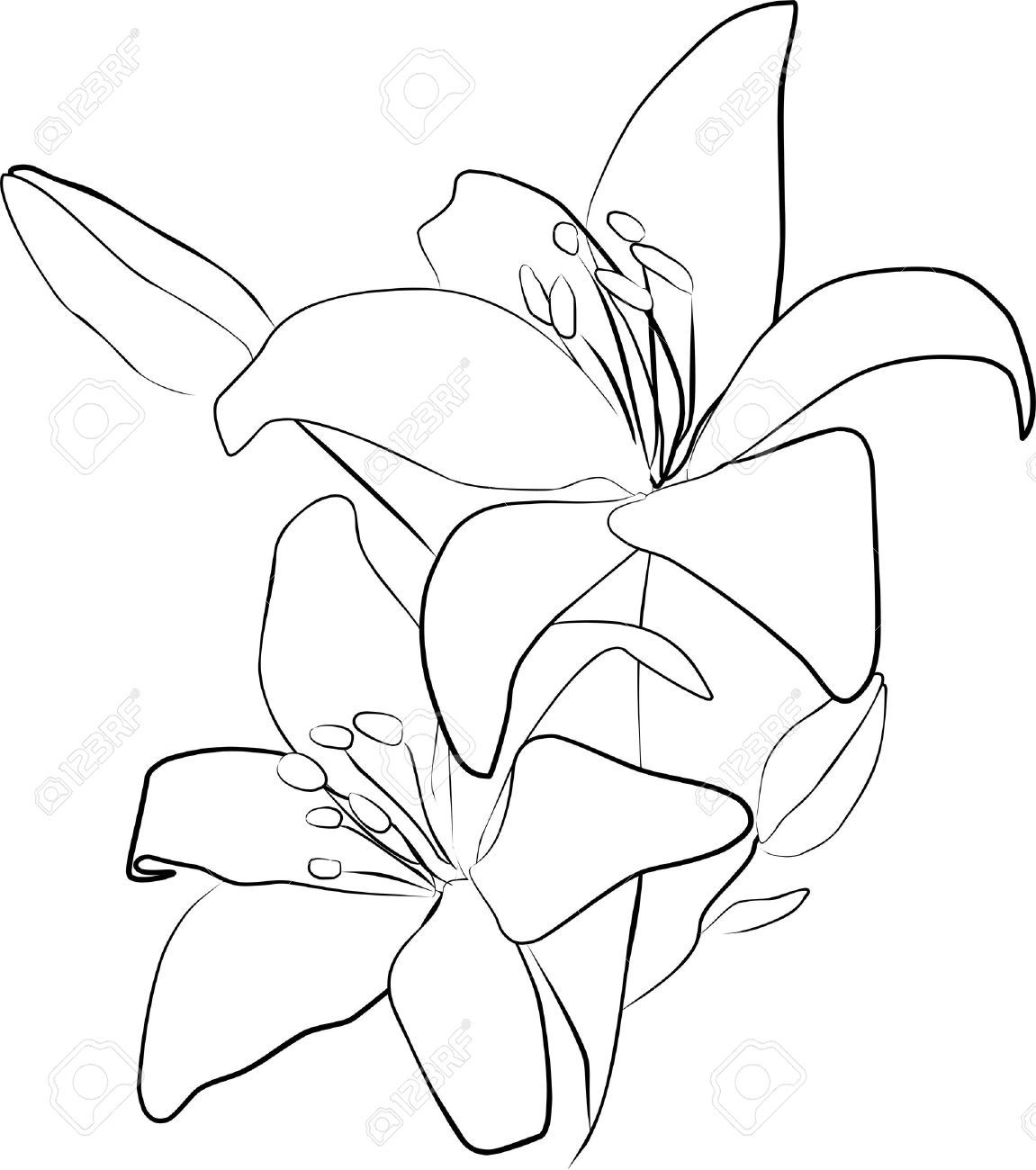 dead lily flower Google Search ΟΞΩ Pinterest
