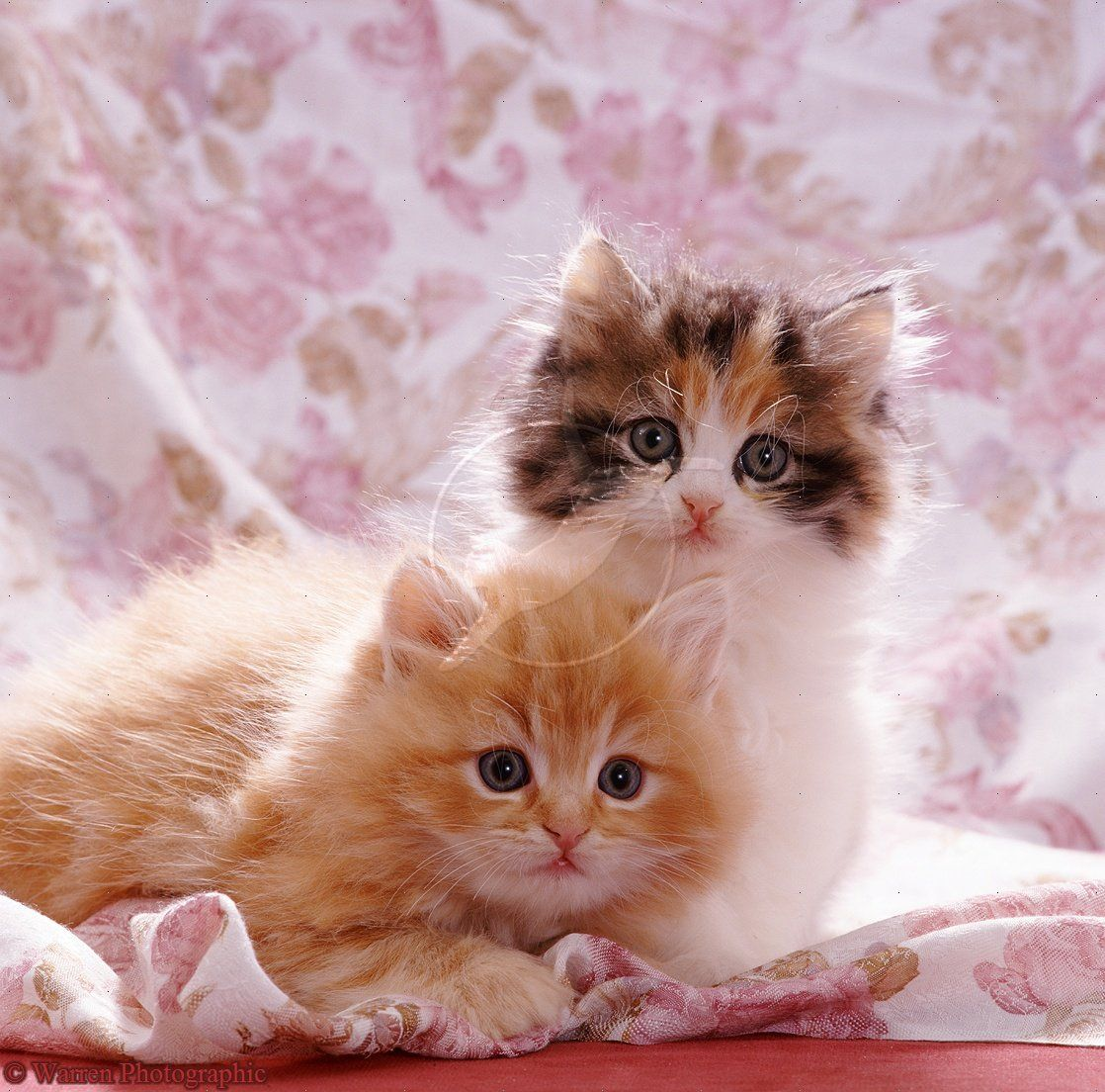 cute cats images very cute cat and kitten picture cute