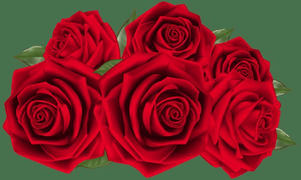 Beautiful Dark Red Roses PNG Clipart Image Roses