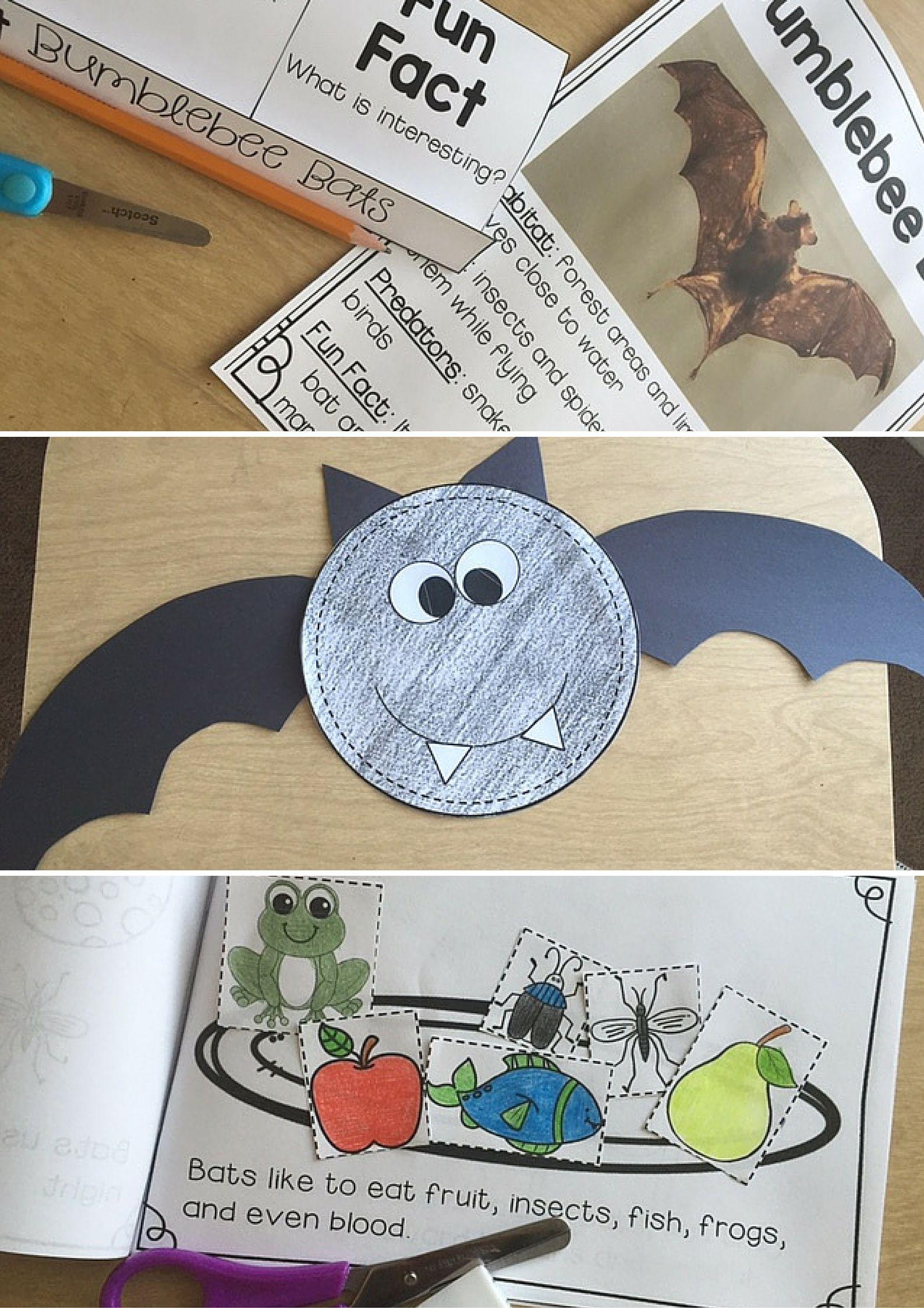 Bats Unit Life Cycle Fact Sheets Interactive Notebook