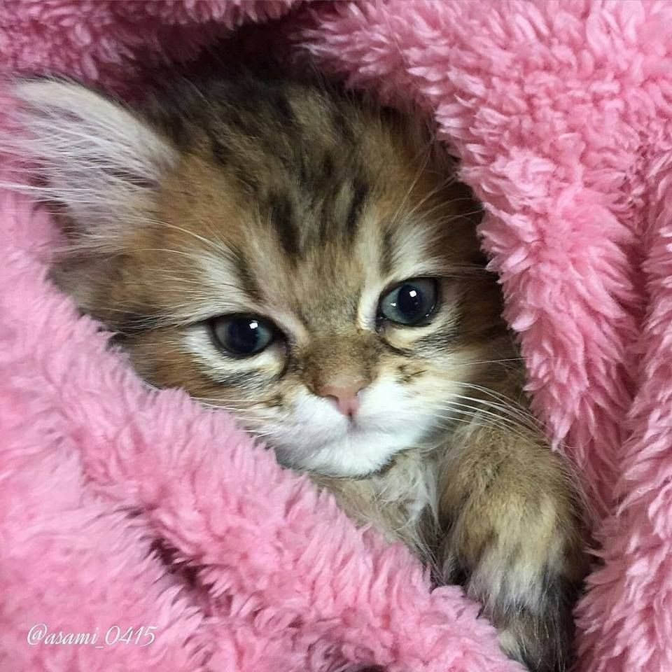 Sweet face, just want to kiss it ) Cats Pinterest