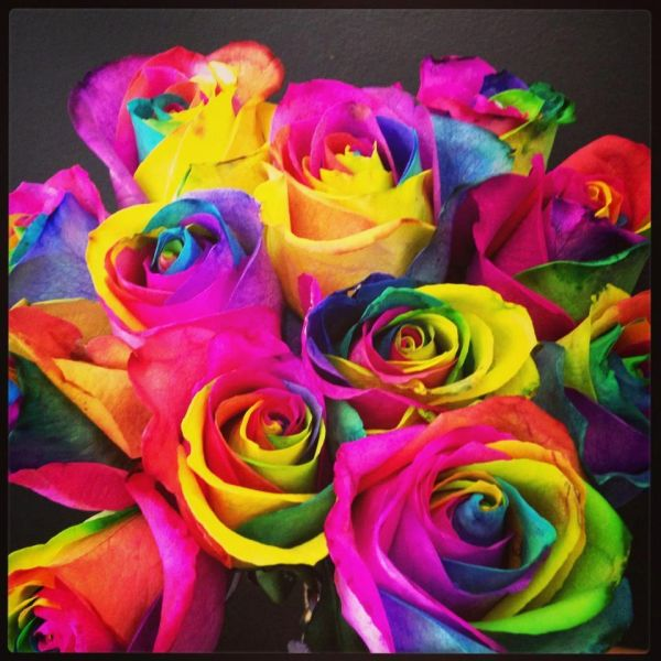 Rainbow Roses   An Arabian Night   Pinterest   Rainbow roses     Rainbow Roses  my absolute favorite flowers because even when they dry out  they still keep their colors