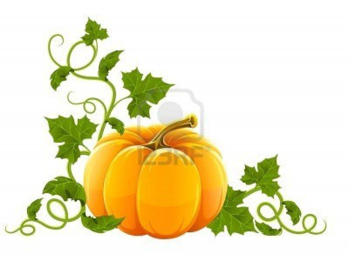 Pumpkin With Lots Of Leaves Pumpkin