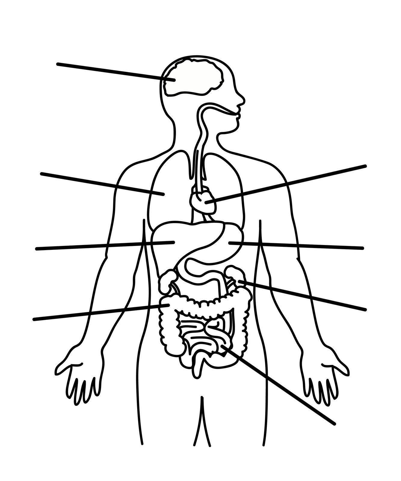 Human Body Kids Worksheet