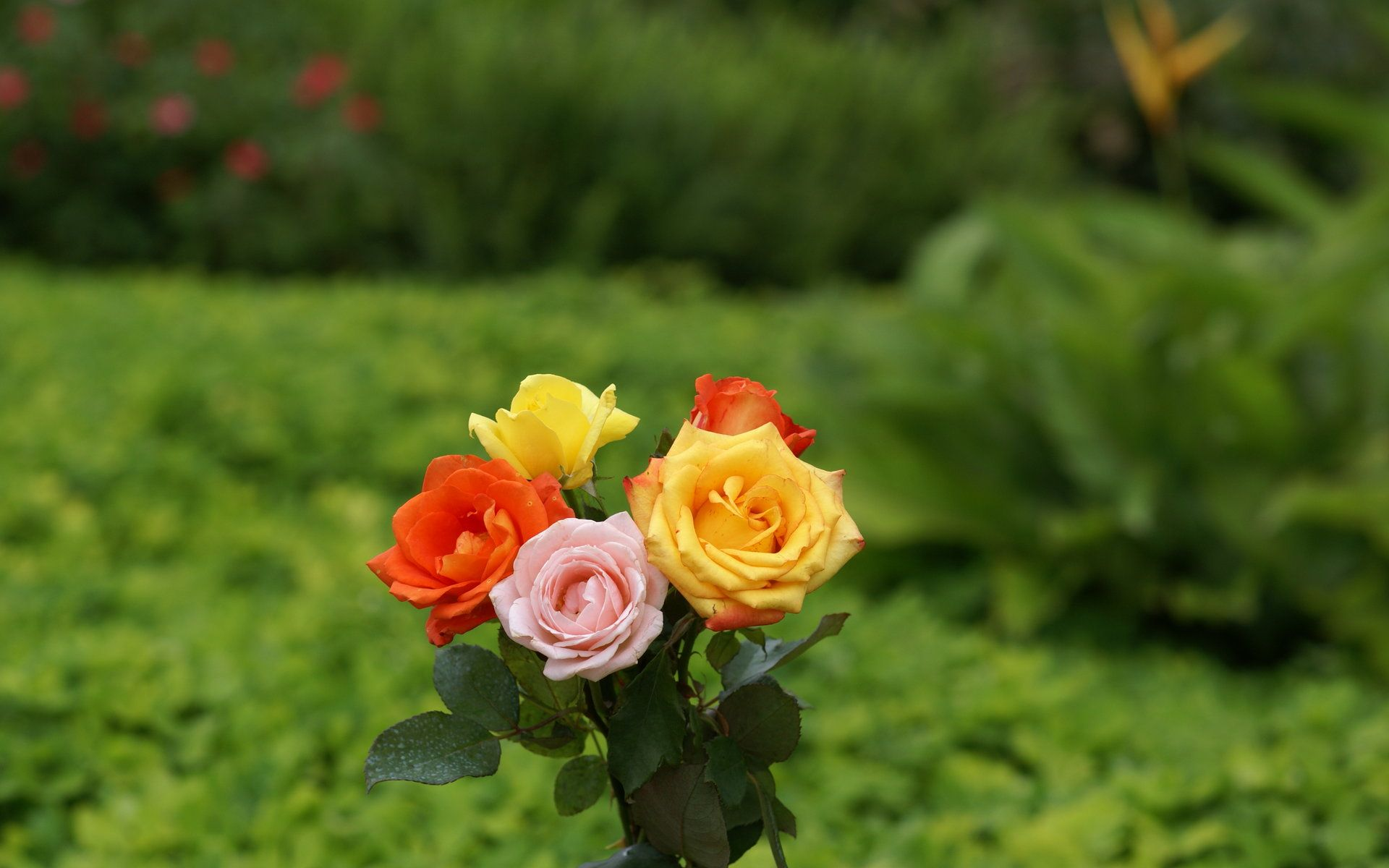 30+ Beautiful Coloured Flowers Pictures Full Size HD