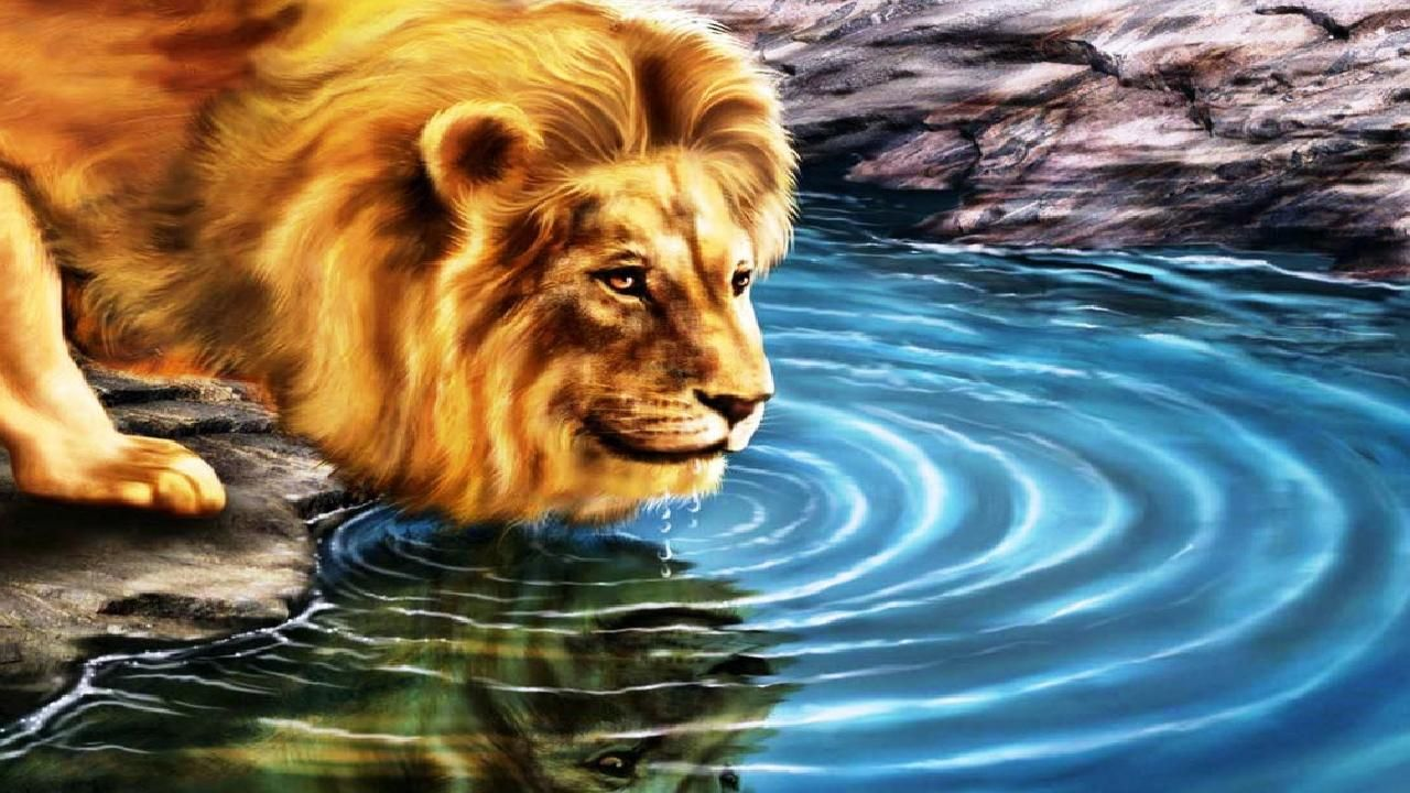 Thirsty Lion 3D HD Wallpaper 3D HD Wallpapers