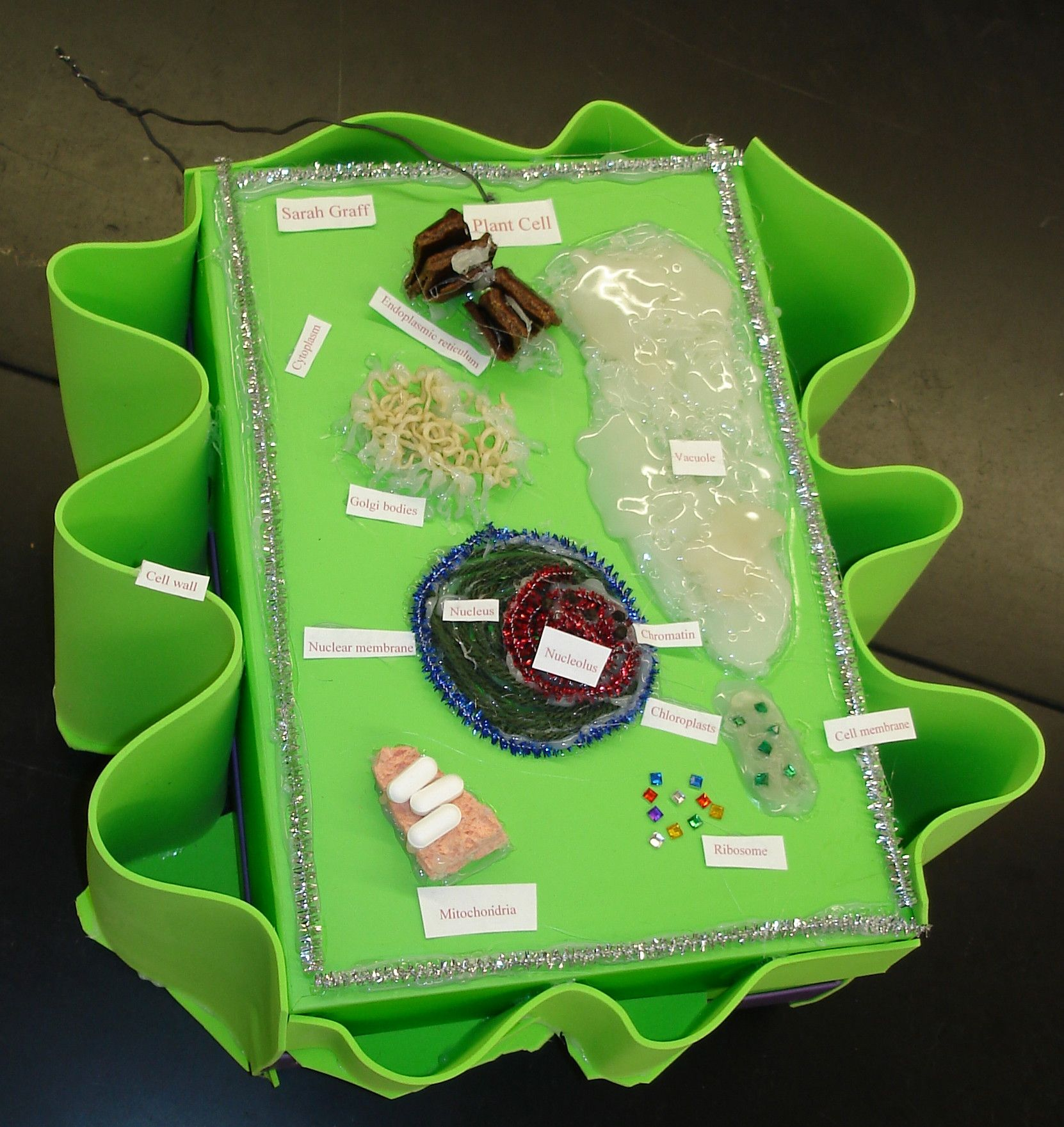 Plant cell, notice great cell wall, 2010. Cell Model