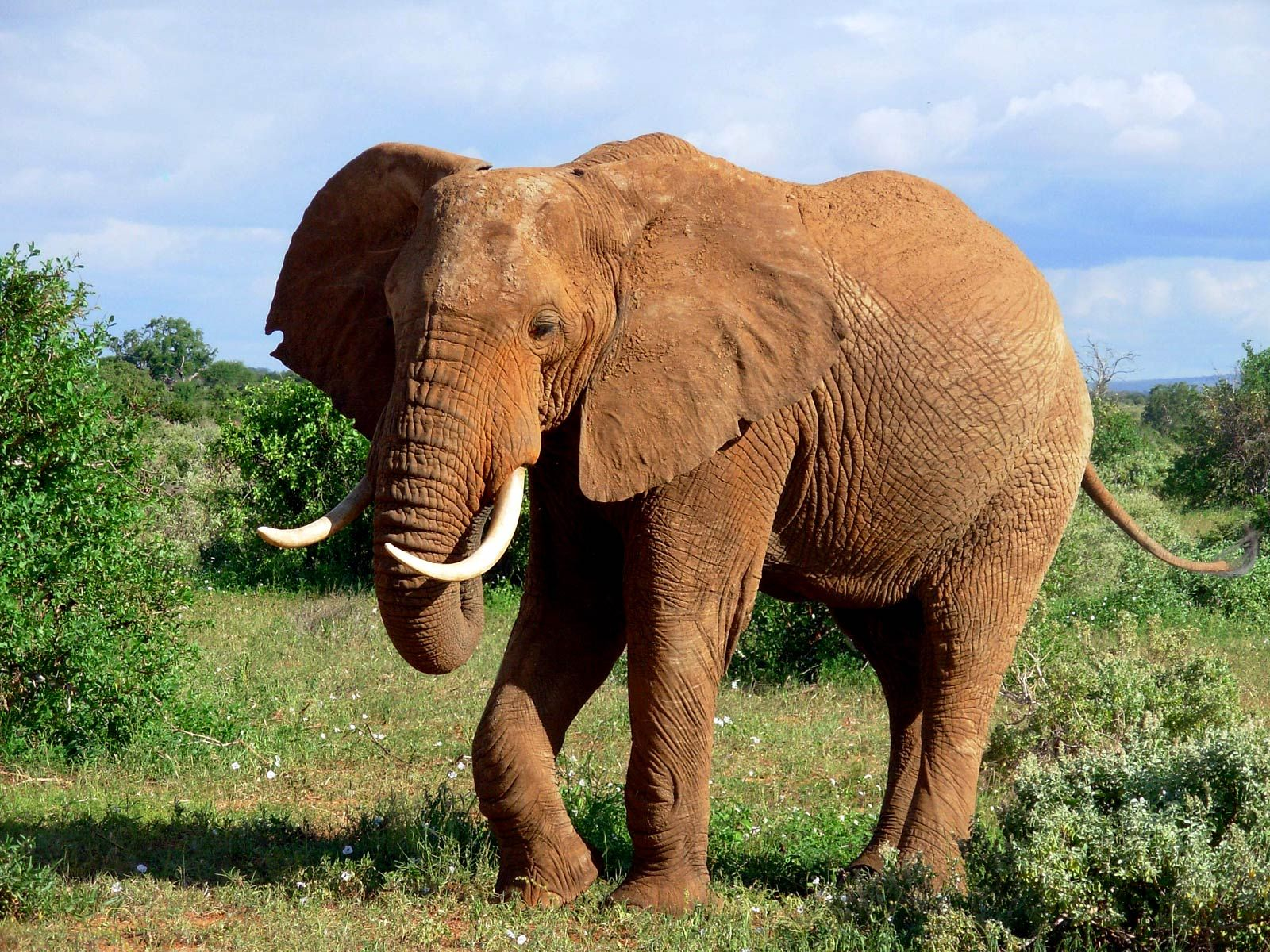 13 best elephant wallpapers images on pinterest   elephant