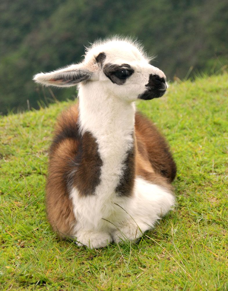 5 Baby animals too cute to be real Baby animals, Baby