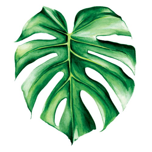 Image result for monstera png transparent SUMMER AT