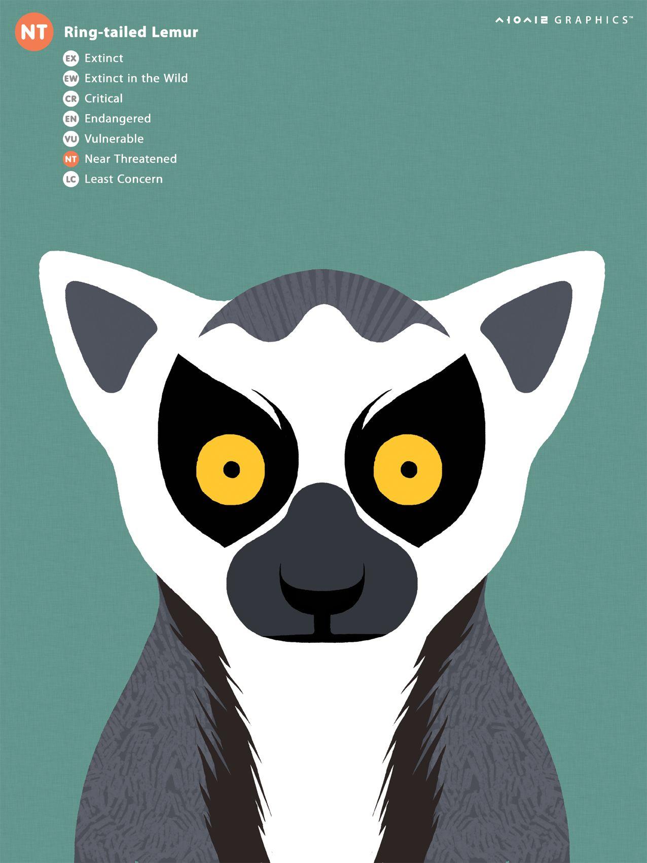 Ring Tailed Lemur endangered animals Pinterest Lemur