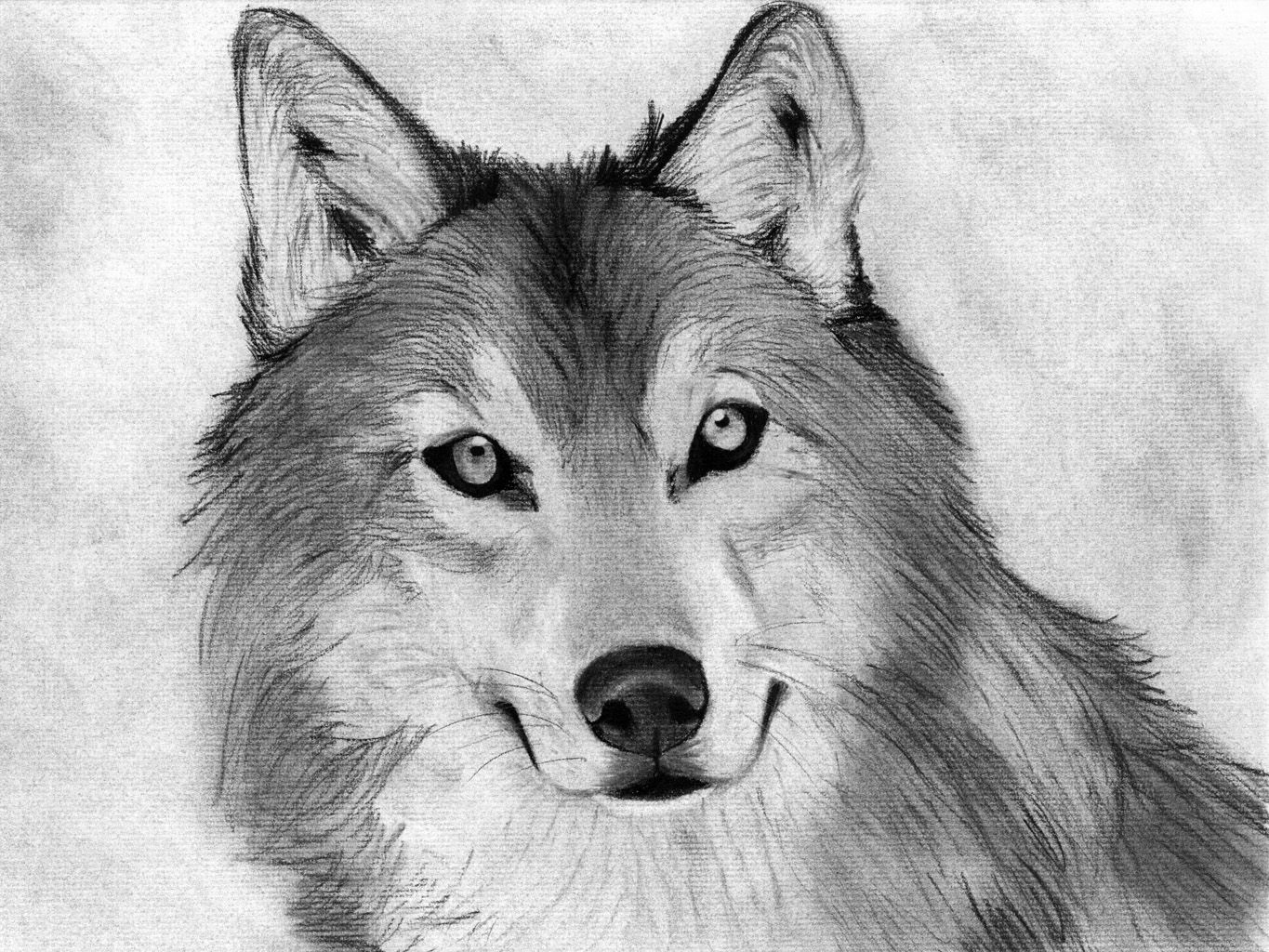 drawing animals for beginners Google Search animals