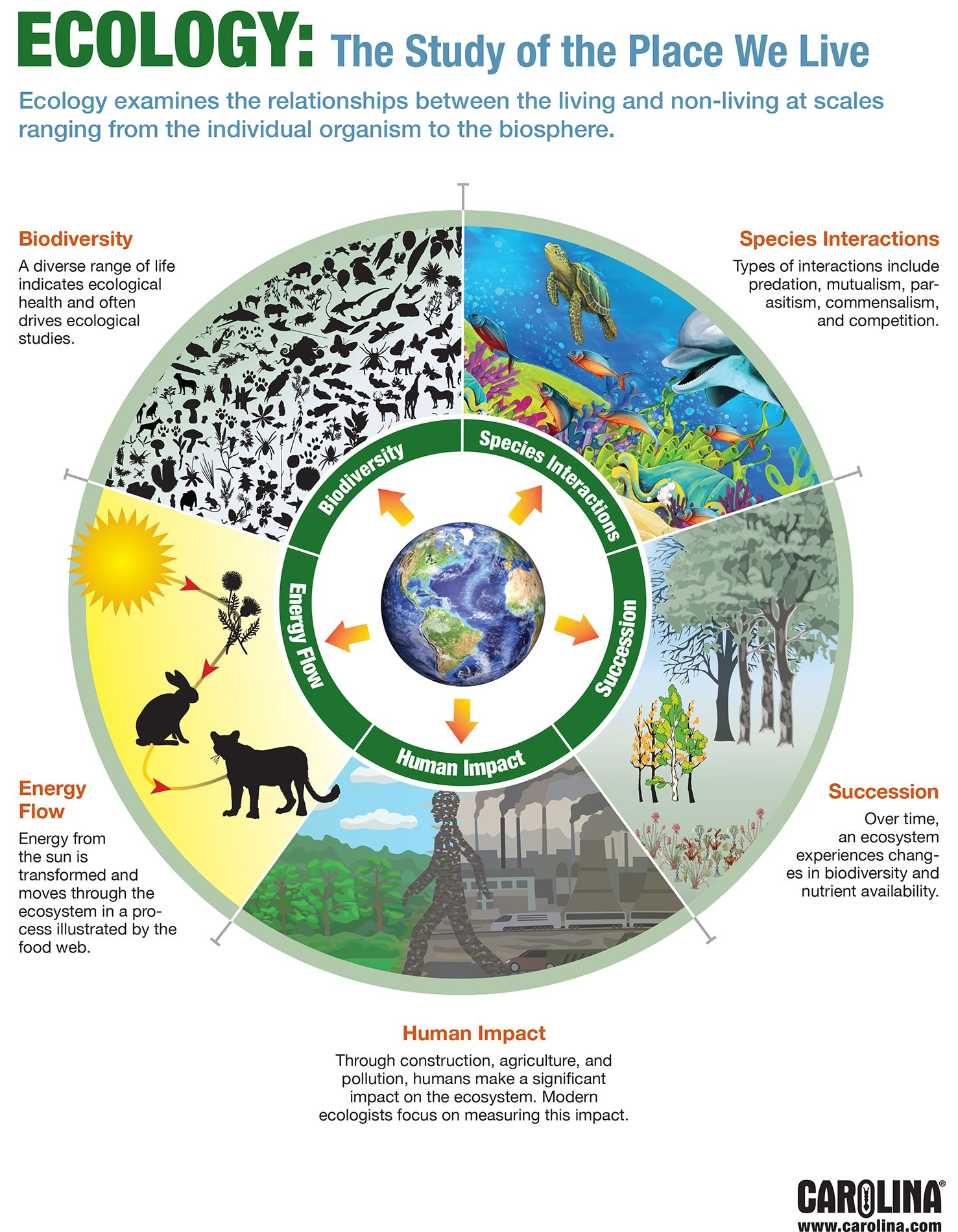 Infographic Ecology The Study Of The Place We Live