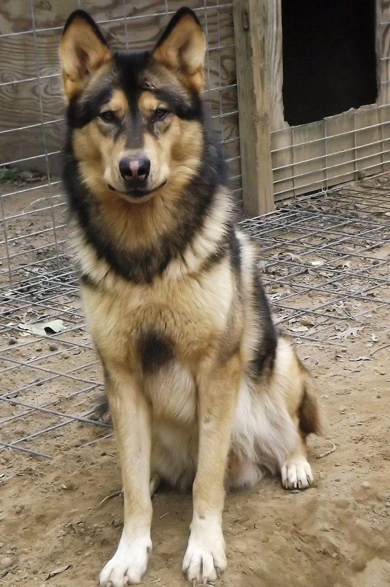 Native American Indian Dog Adorable Pinterest Native