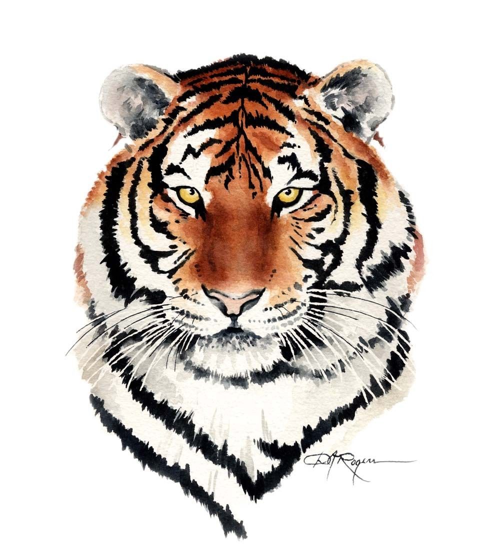 tiger watercolor painting art print signedby k9artgallery