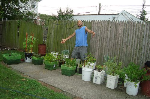 No Garden? Here Are 66 Things You Can Can Grow At Home In