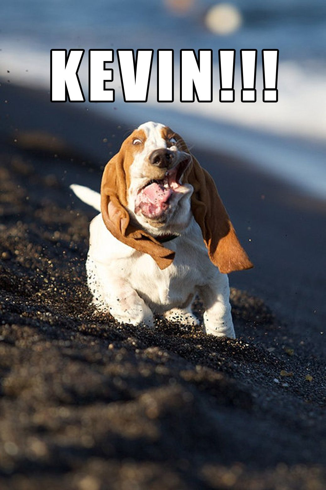 """KEVIN!!! (""""Home Alone"""") Fun and FUNNY Animals"""