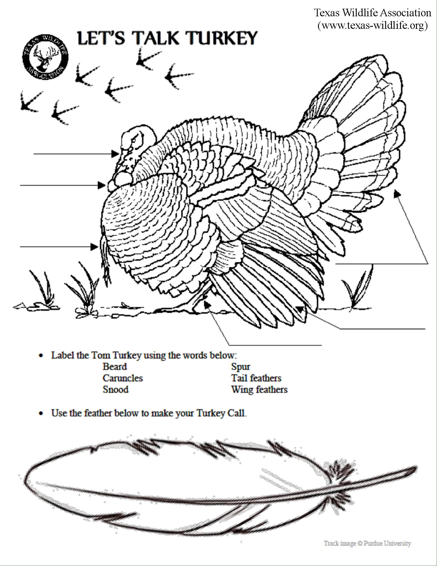 Leaf Anatomy Coloring Worksheet Key