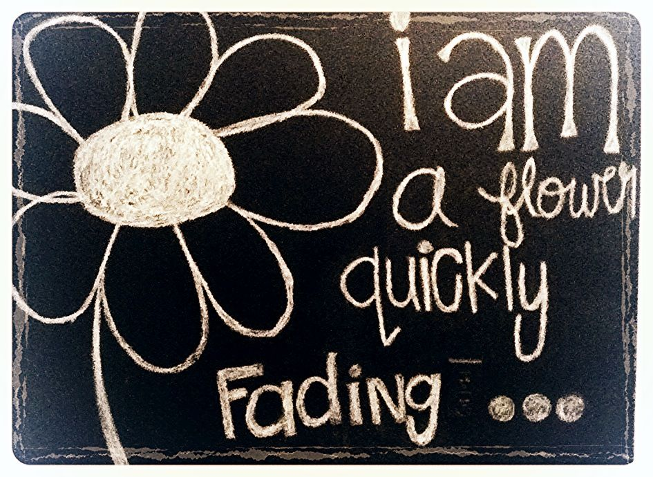 I am a flower quickly fading, here today and gone tomorrow