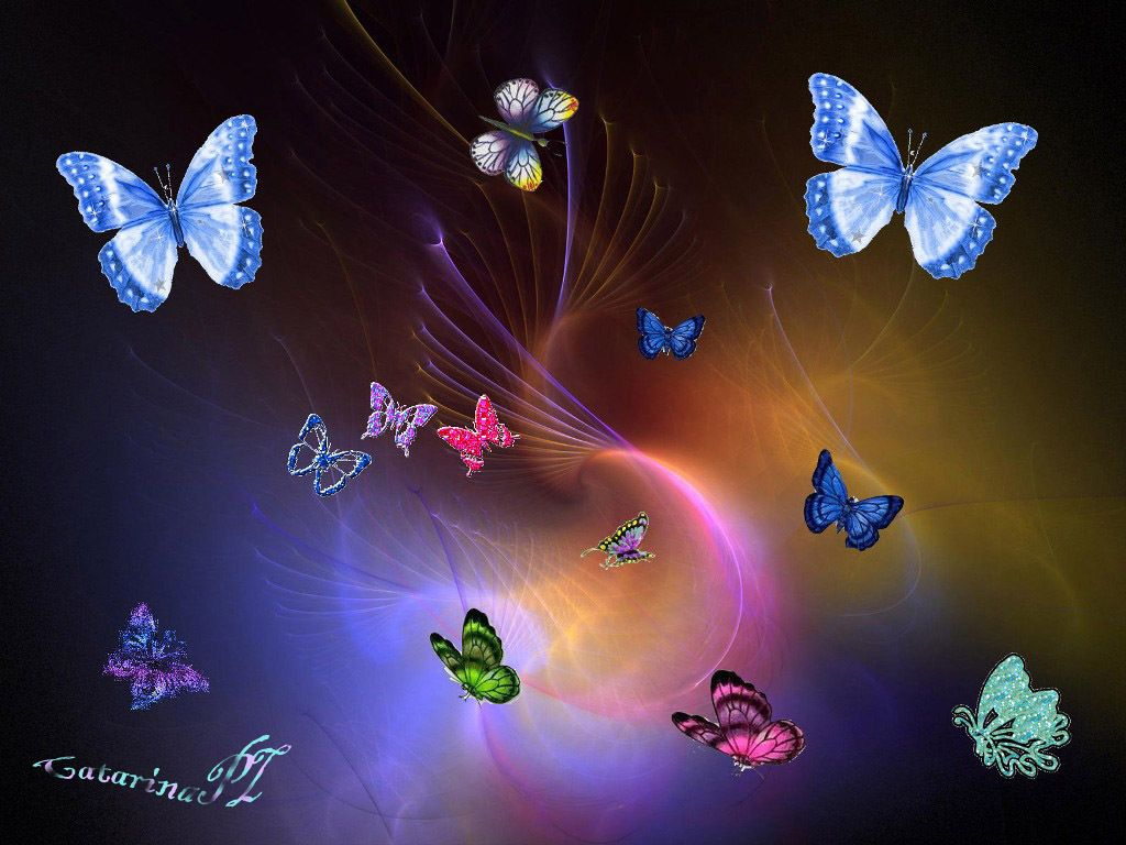 colorful girly backgrounds   colrful butterfly, butterflys