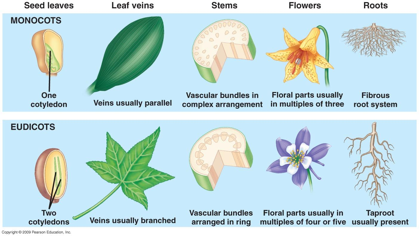 Types Of Seed Plants