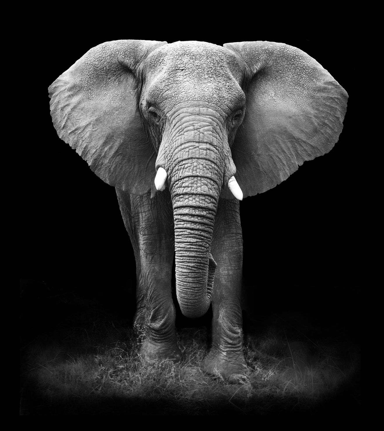 Pin by Mike on African Elephants Pinterest