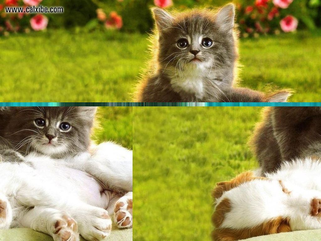 Cute and Funny Cats and Dogs Cute Christmas Kittens And
