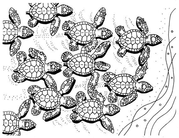 baby sea turtles sea turtles and coloring pages on pinterest