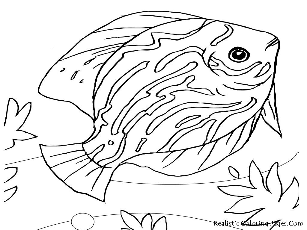 Ocean Animals Coloring Pages sea life coloring pages