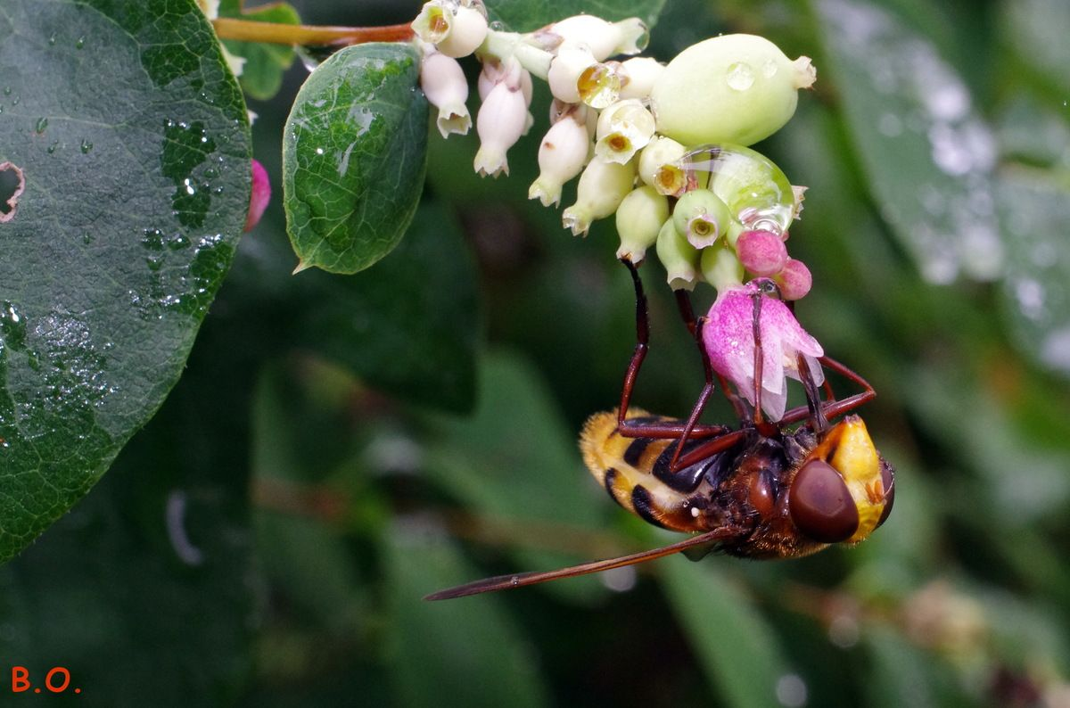 Fleur Nature Macro Guepe Abeille Insecte