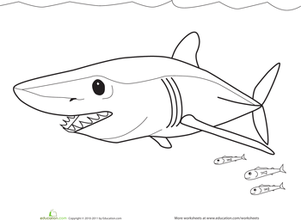 worksheets sharks and coloring pages on pinterest
