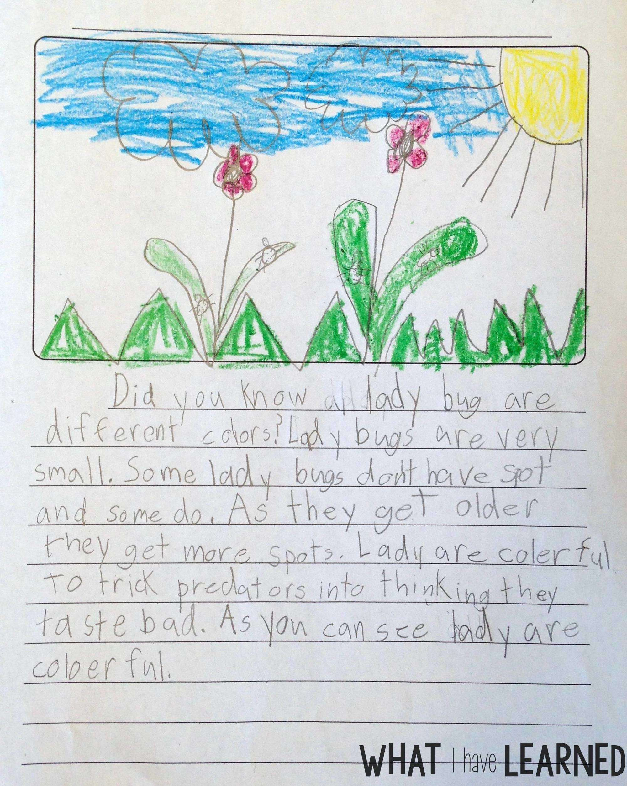 Teach Students To Use A Checklist Informational Writing Week 4 Ladybugs