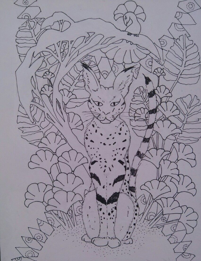 serval cat in africa quot coloring page cat illustrative art