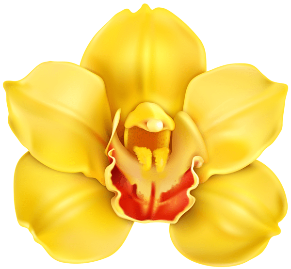 Yellow Orchid Transparent PNG Clip Art ClipArt