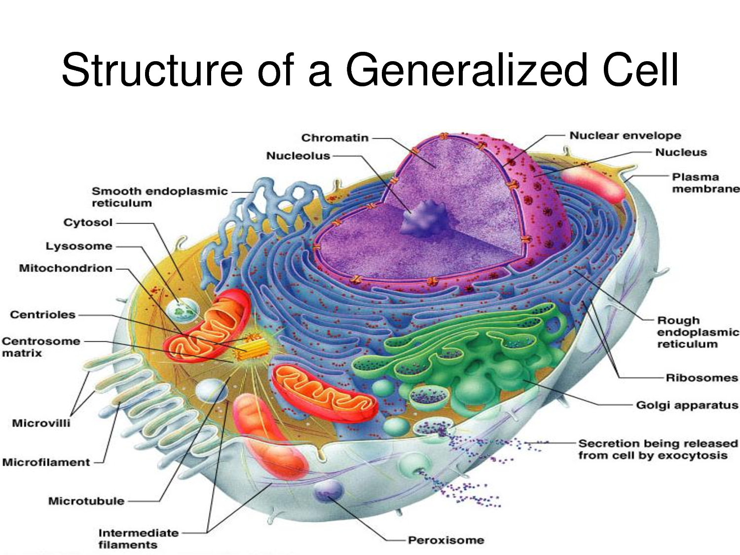 Anatomy Of A Generalised Cell