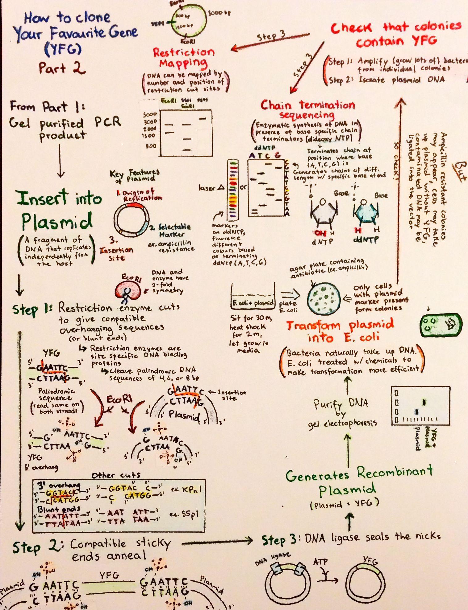 Introductory Biochemistry Worksheet