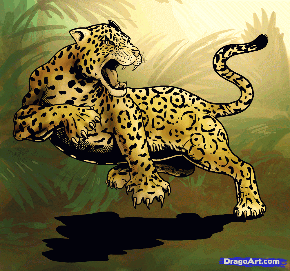 how to draw a jaguar animal, jaguar cat drawing