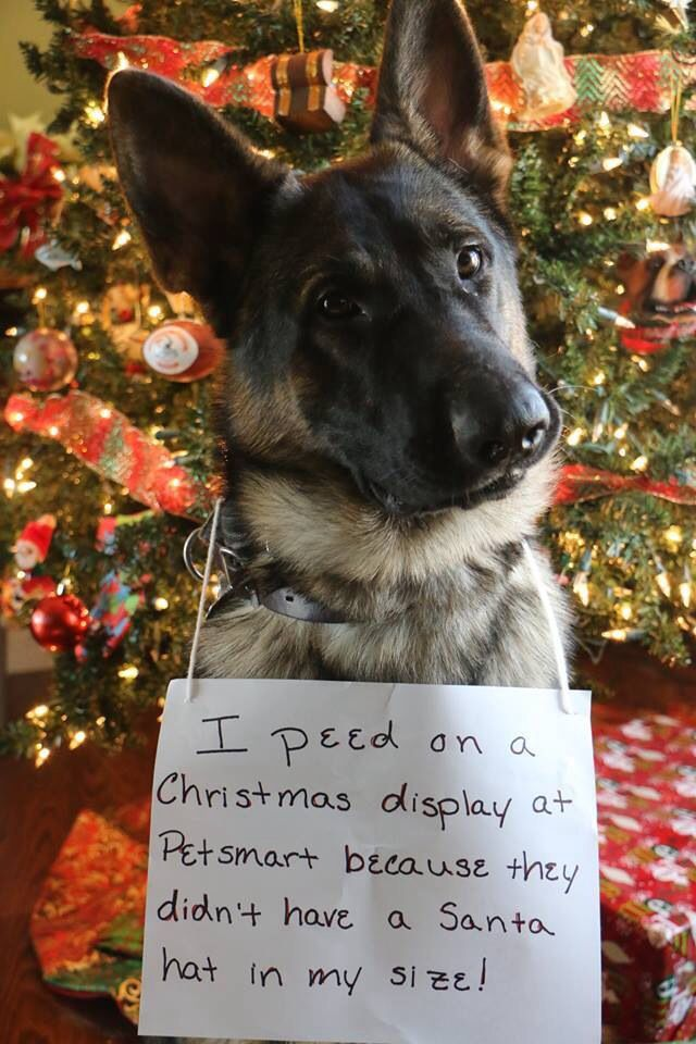 I Peed On A Christmas Display At Petsmart Because They