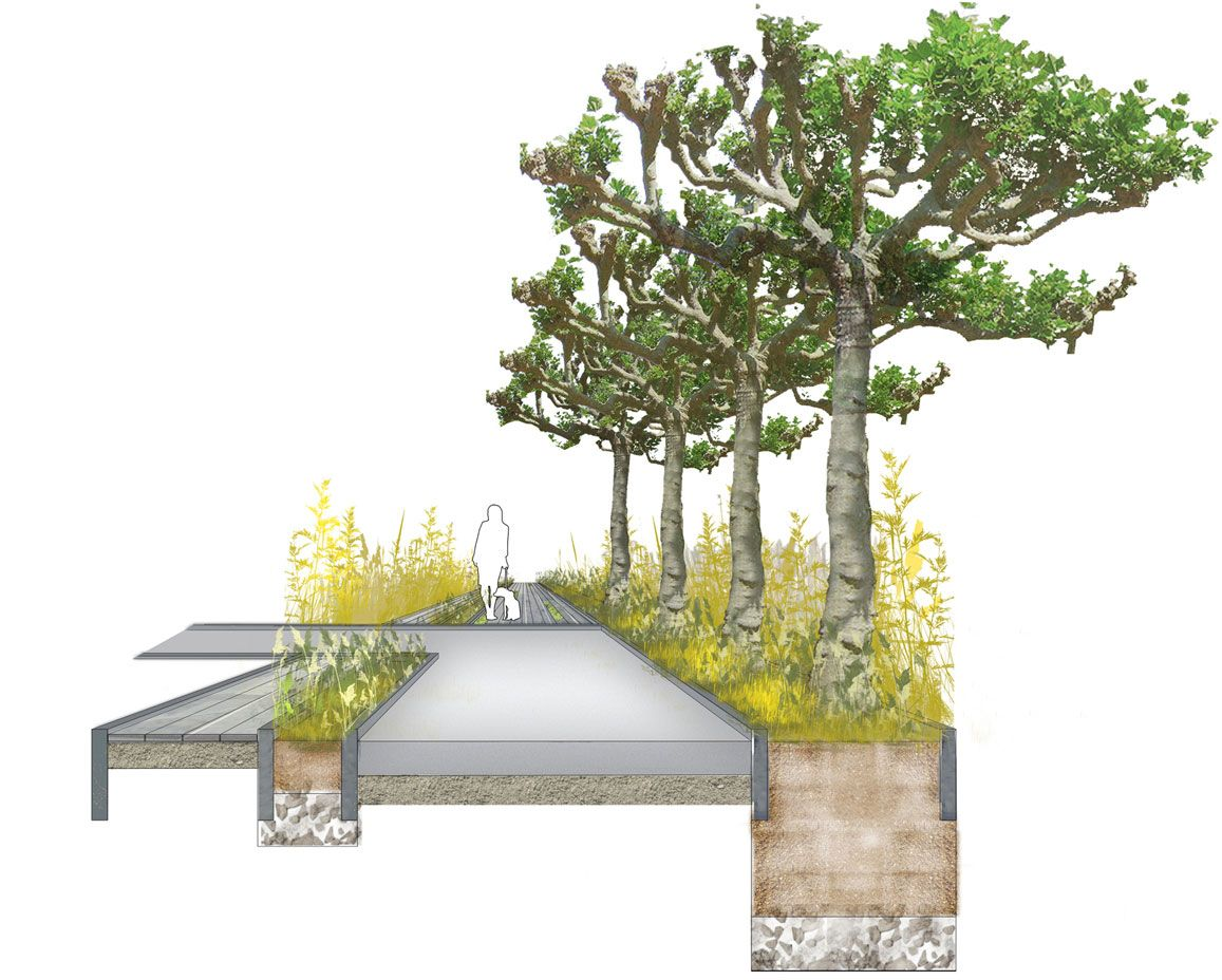 tree planting section architectural drawing graphics