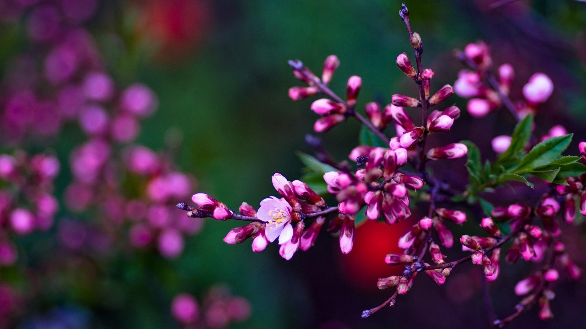 Spring Flowers Wallpaper Hd Natures Wallpapers