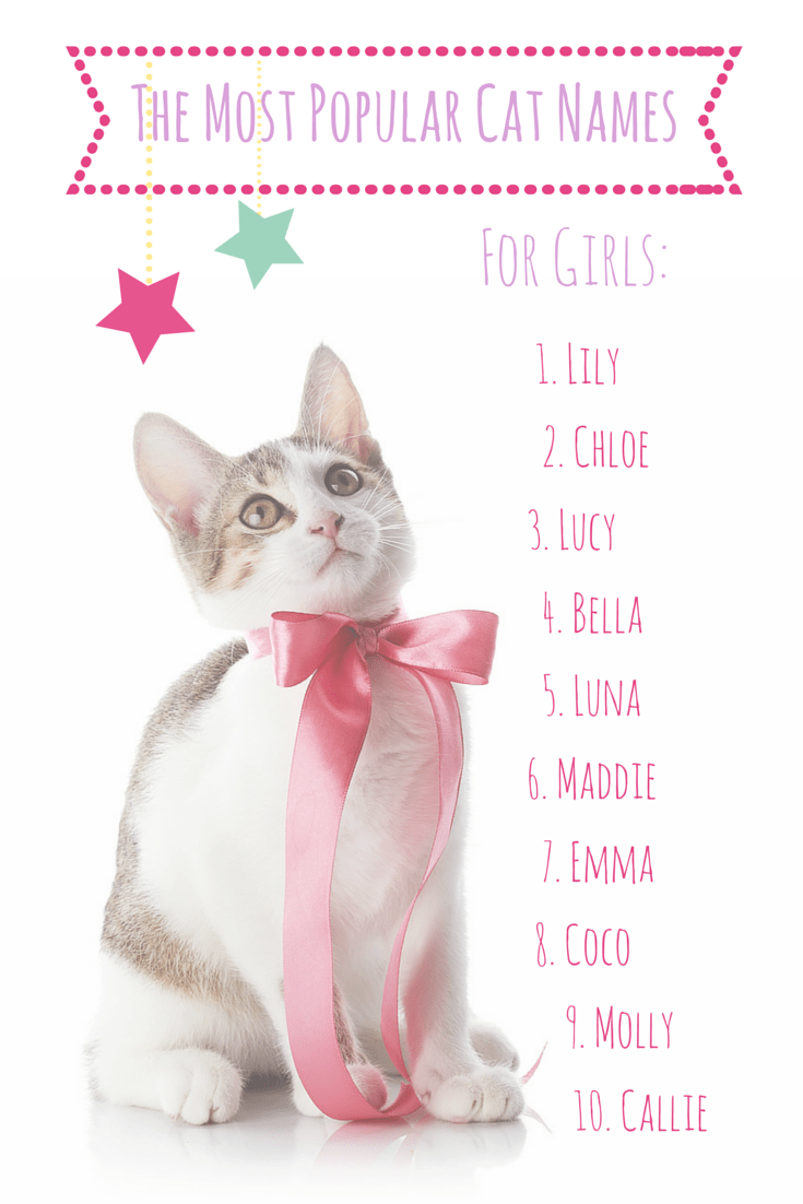 It's a GIRL — cat! 50 of this year's most popular lady