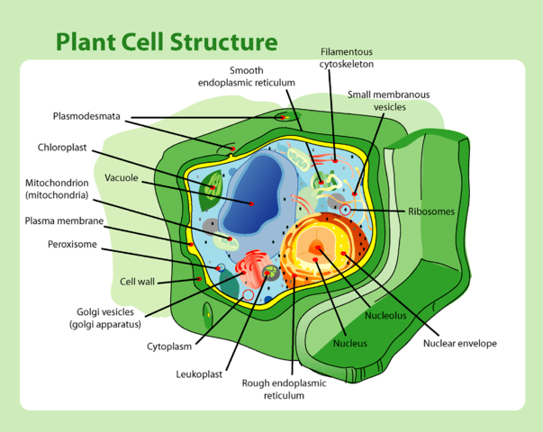 Carbohydrates are the structure of a plant cell wall