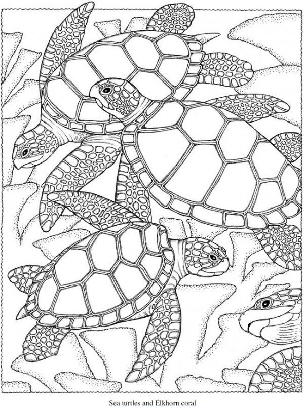 turtle coloring pages for adults aaldtk