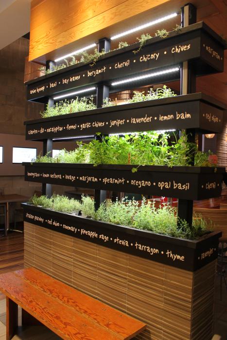 Vertical Herb Garden LYFE Kitchen Restaurant In Palo