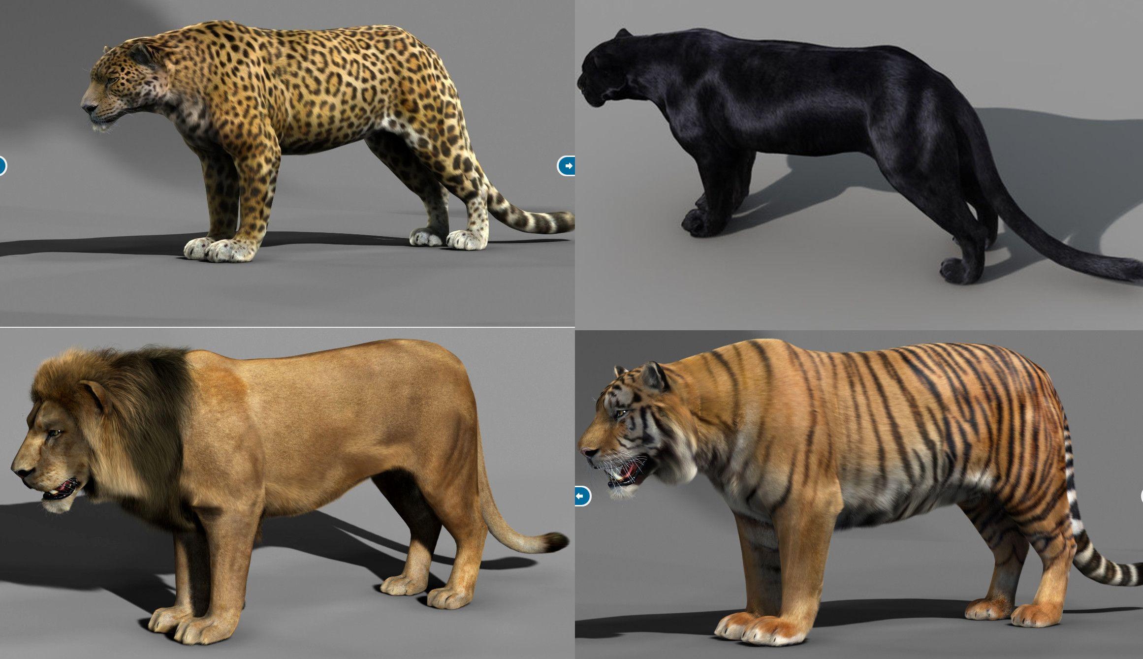 panther jaguar hybrid Buscar con Google FELINES