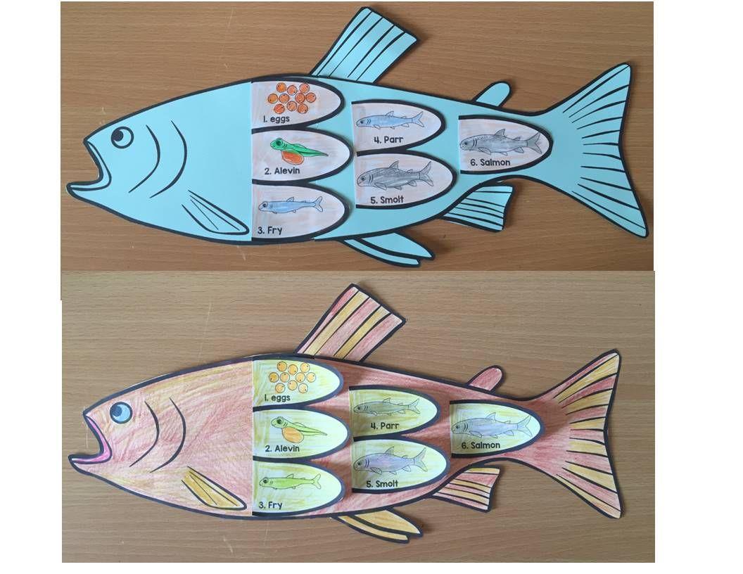 Fish Life Cycle Art Activity Word Wall Posters And