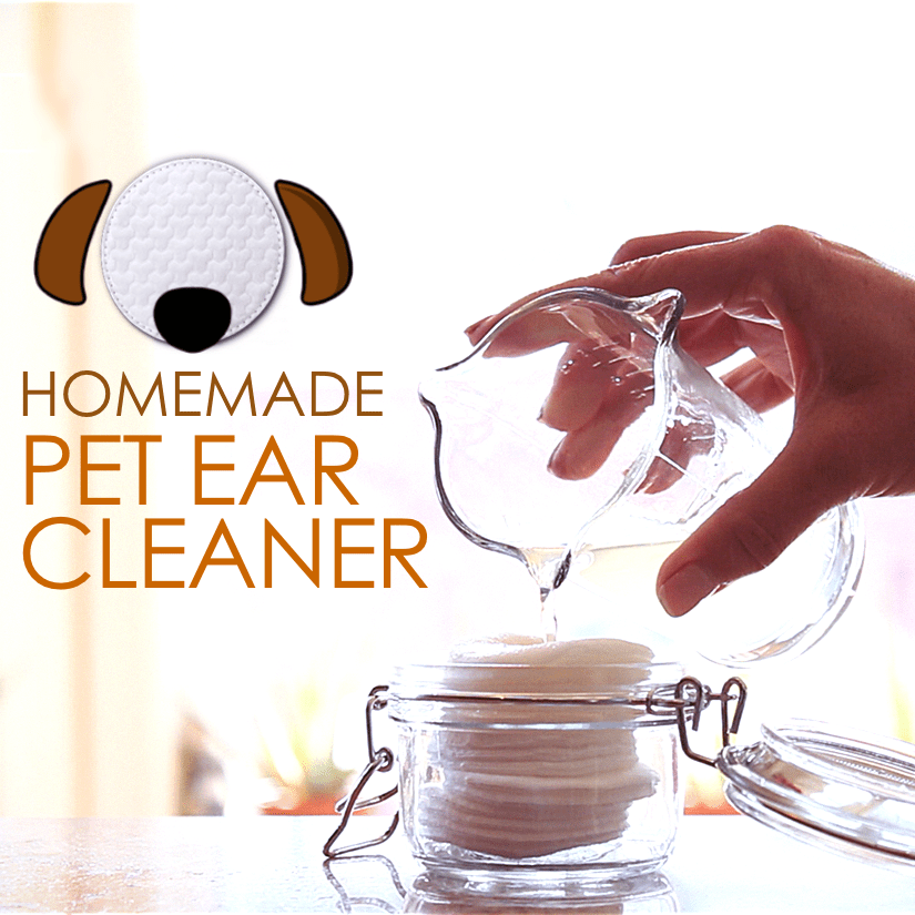 VIDEO DIY Ear Cleaner for Dogs and Cats Ear Cleaner for
