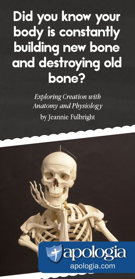 Exploring Creation With Human Anatomy And Physiology By Jeannie ...