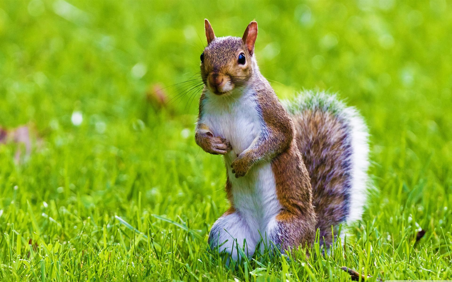 wild life Wallpaper, wildlife, cute, squirrel 561569
